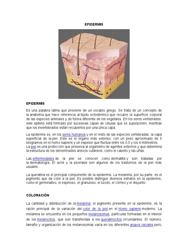 Fantástico Queratina Anatomía Definición Bosquejo - Imágenes de ...