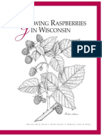 Growing Raspberry in WI A1610