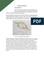 ANESTESIA EPIDURAL.docx