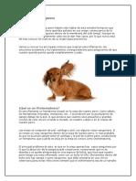 Otohematoma en Perros