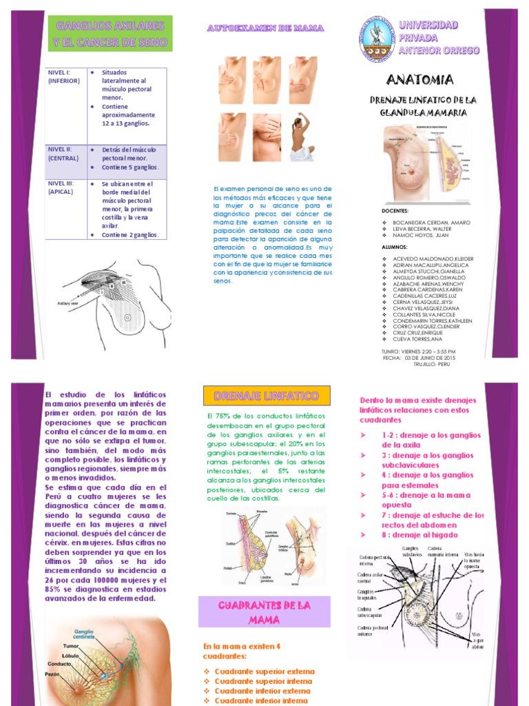 triptico drenaje linfatico mama .pdf