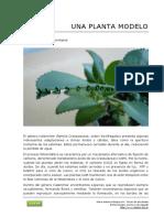 100 Kalanchoe Una Planta Modelo