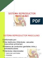 sistema-reproductor-masculino.ppt