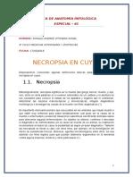 NECROPSIA EN CUYES