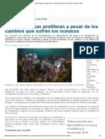 Pulpos y Sepias Proliferan a Pesar de Los Cambios Que Sufren Los Océanos