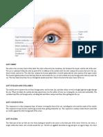 Anatomy of the Left Eye