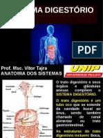Aula de Sistema Digestório