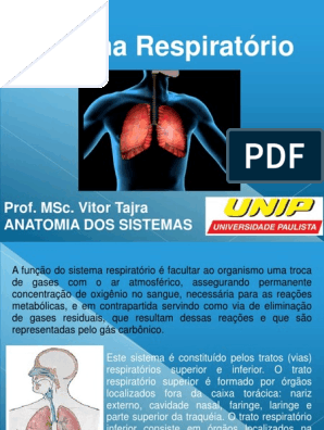 anatomia do sistema respiratorio superior e inferior