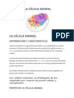 Celula Animal 2016
