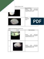 tabel hasil identifikasi bakteri laut dan sedimen