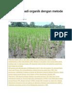 Budidaya padi organik dengan metode SRI.docx