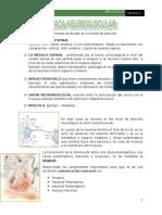 Clase 3 Placa Neuromuscular