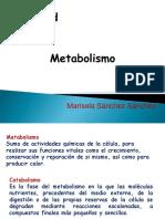 Metabolismo, Biología 1