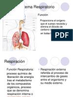 Sistema Respiratorio Parte 1