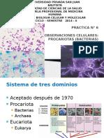 291180014-procariotas