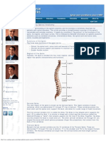 Explaining Spinal Anatomy
