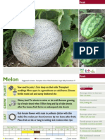 Melon growing instructions