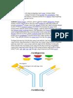 Document Makalah Antibodi