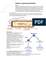 TEMA 4 biologia