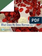 Bone Marrow Book