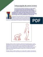 Postura erguida del cuerpo humano.doc