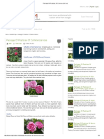 Package of Practices of Commercial Rose