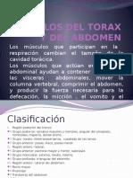 Musculos Del Torax y Del Abdomen