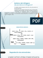Metabolismo Del Nitrogeno y Ciclo de La Urea