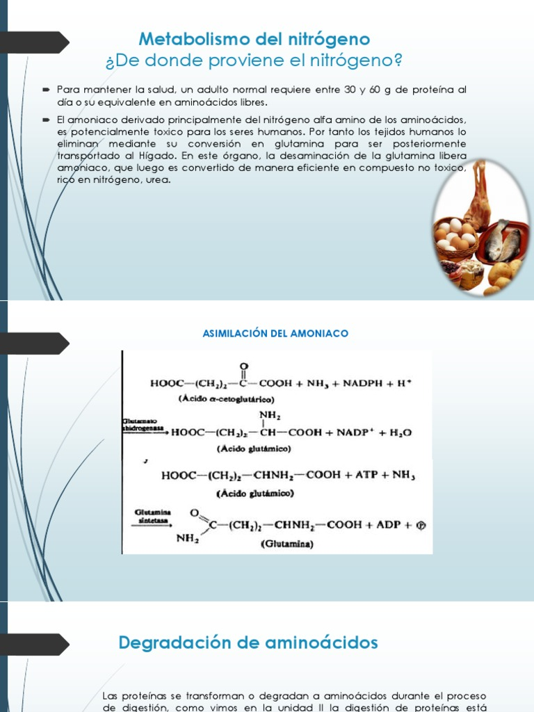 Tu tienes el metabolismo basal ?