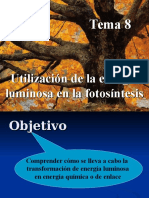 fotosintesis.ppt