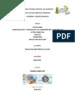 citoplasma y nucleo