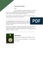PLANTAS MEDICINALES AUTOCTONAS Entre Rios