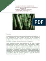 Información Importante Sobre Bambu