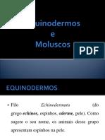 Equinodermos e Moluscos