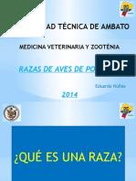 razasdeavesdepostura-140221204628-phpapp01.pptx
