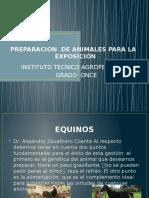 Preteparacion de Animales Para La Expocicion