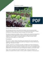 13 Soluciones Ecológicas en La Huerta