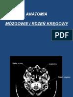 Anatomia Oun