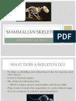 Mammalian Skeleton Practical
