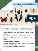 Insectos Desarrollo y Morfología