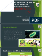 Escherichia Coli PPT