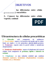 Diferencias Entre Célula Procarióeucariótica, Animal Vegetal
