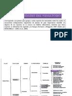 DITYLENCHUS-.pdf