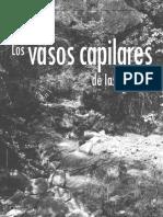 Los Vasos Capilares de las Cuencas