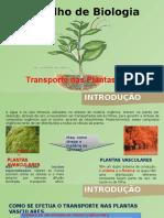 Trabalho de Biologia Tansporte Plantas