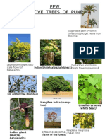 Native Trees of Pune