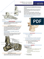 (9F) Ankle - Bones, Joints, Tendons and Ligaments-