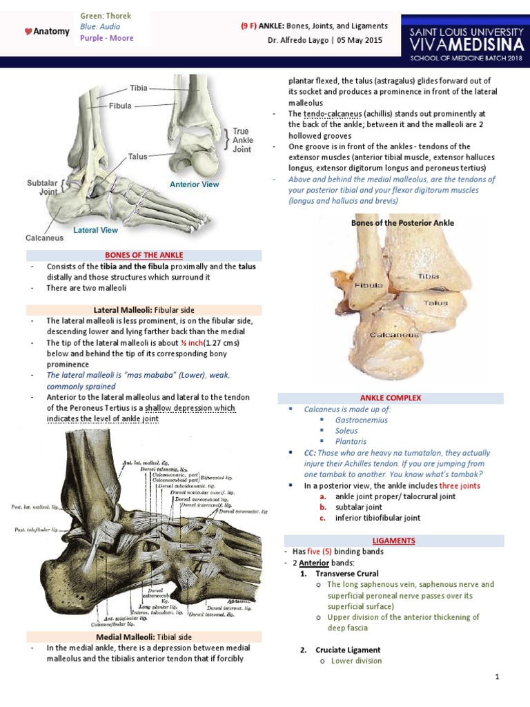 9F) Ankle - Bones, Joints, Tendons and Ligaments- | Ankle | Foot