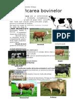 Clasificarea bovinelor