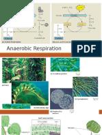 Anaerobic Respiration & Photosynthesis.pptx